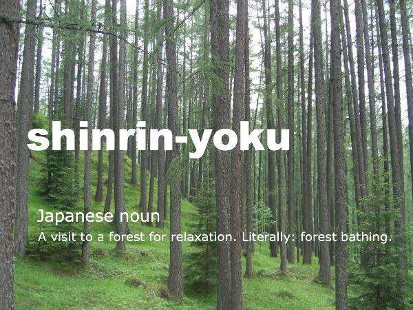 Forest Bathing New York Spirit