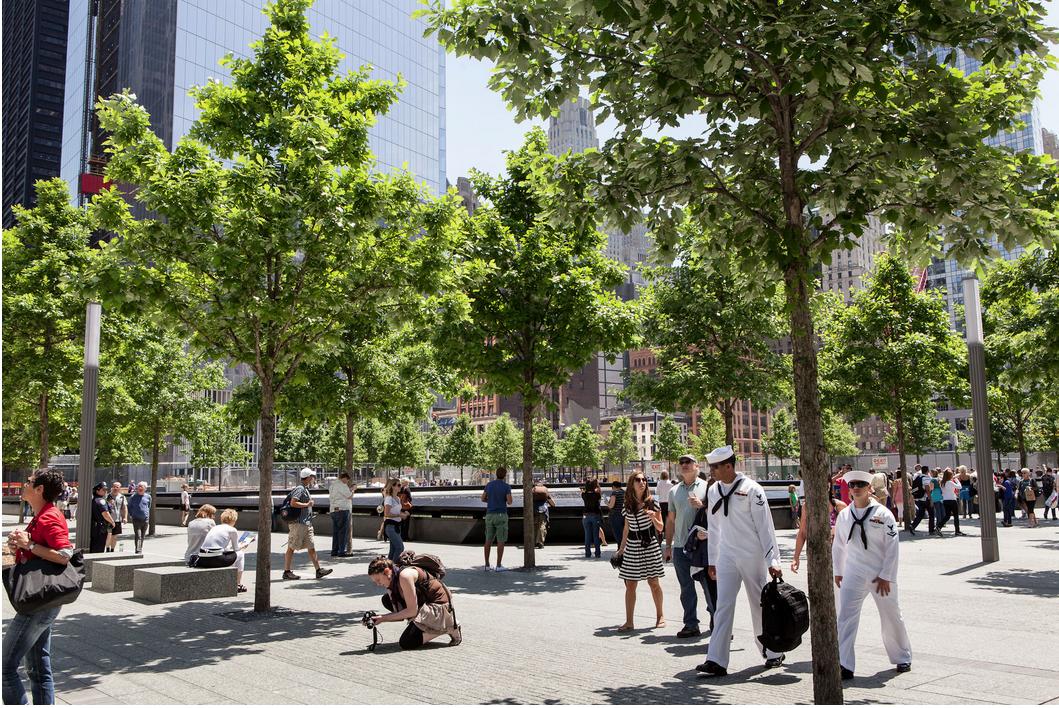 The Magic And Medicine Of Trees New York Spirit