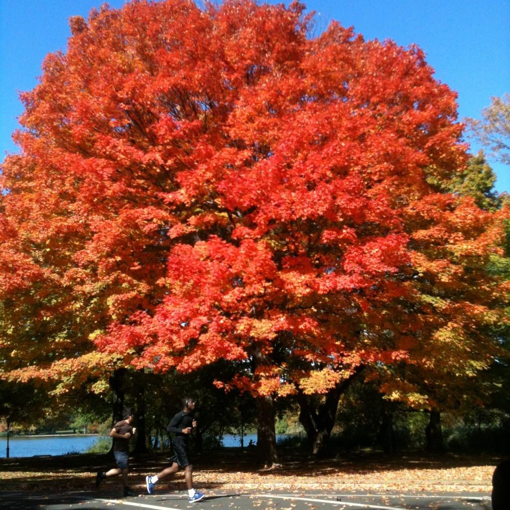 Let's celebrate Fall Equinox –September 23