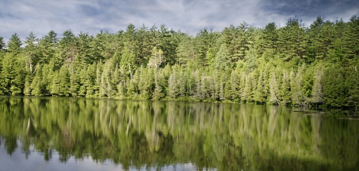 Forest reflected in a lake