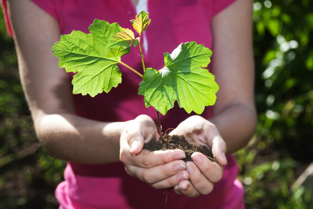 seedling in hands compares to careful communications