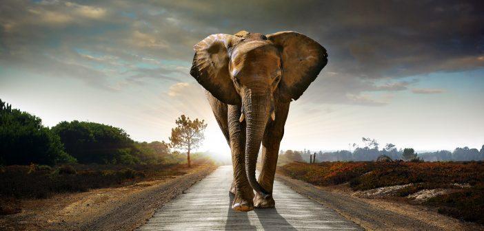 Swimming with Elephants: HellbentonHoney